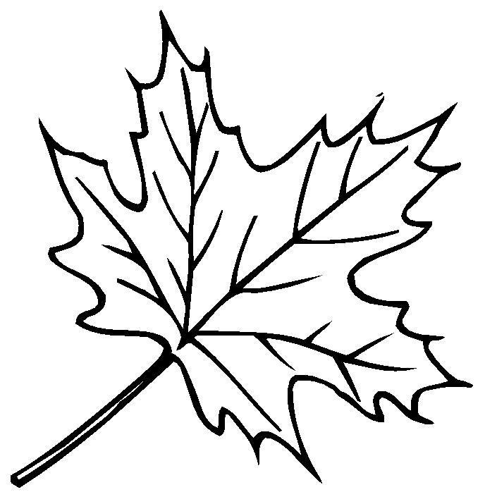 Рисунок черно белый дерева